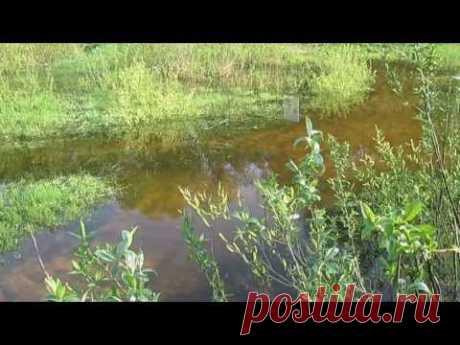 Полезные обитатели огорода. Лягушки и жабы. Н.М.Жирмунская.