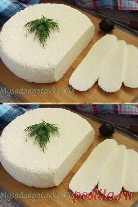 Сыр - Мой сад 🌿