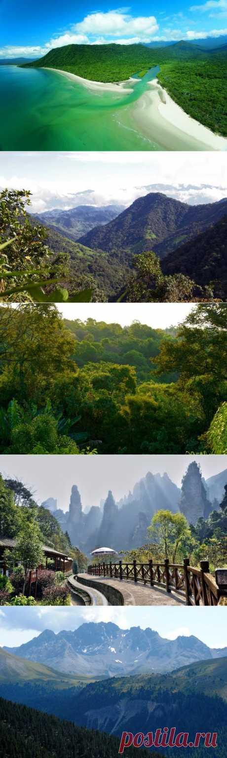 Самые красивые леса / Туристический спутник