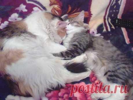 Кошка Муся с сыночком Тимошей.