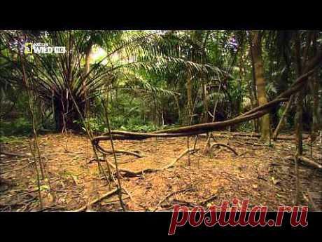 ▶ Дикая природа Амазонки. Дикое царство. - YouTube