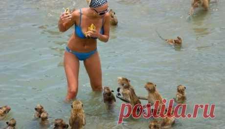20 забавных и смешных пляжных фотографий