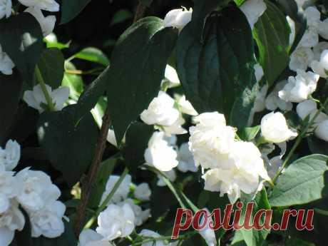 Цветы в нашем саду..