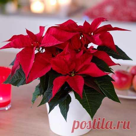 Всего семь приемов, чтобы комнатные цветы росли как на дрожжах — Садоводка