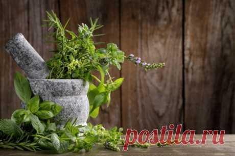 Пряные травы для вашего сада. Список, названия с фото - Ботаничка.ru