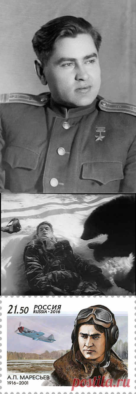 «Куда полз летчик Маресьев?» Ошибочность решений ведет каждого из нас в «болото» проблем | Сто секретов репортёра | Яндекс Дзен  Он застрелил медведя-шатуна, обнюхивавшего его, летчика-истребителя, после падения самолета в лес. Он 18 суток полз к своим по болотам, отморозил и потерял ноги. Он потом летал с протезами и сбивал немецкие самолеты. Но это рассказ не только о подвиге летчика Маресьева, но и о его ошибке: он был в 4 километрах от нашего штаба, но пополз в другую сторону…