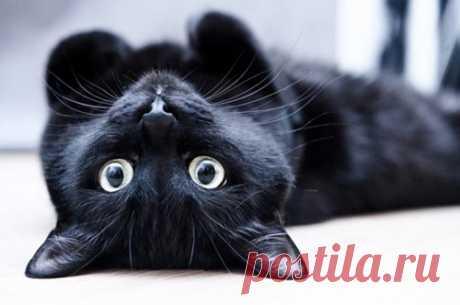 Если ваша кошка делает это, она хочет сказать вам что-то очень важное!