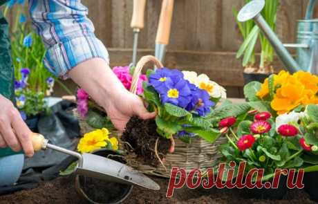 14 цветов, которые можно сажать уже в марте — INMYROOM