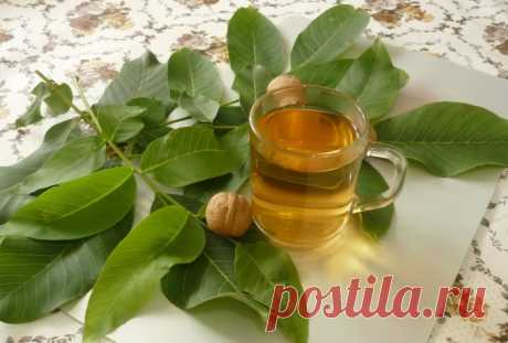 Walnut leaves: application and medicinal properties how to dissolve oil, tea from bark