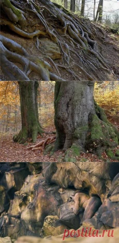 Девушка спряталась в лесу. Кто сможет найти?! | Головоломыч