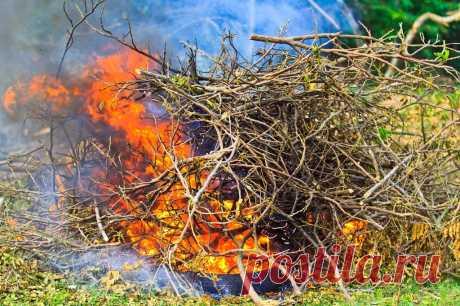 Как правильно сжигать мусор на участке – разбираемся с законами   Дела огородные (Огород.ru)