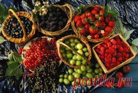 Как с помощью удобрений удвоить урожаи ягодных кустарников  Все хотят вырастить на даче хороший урожай ягод. Но из-за неправильного ухода, болезней и вредителей урожаи часто не радуют. Между тем с помощью правильного внесения удобрений можно значительно подня…