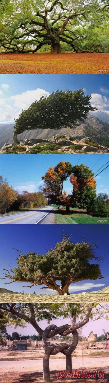 Необычные и удивительные деревья.