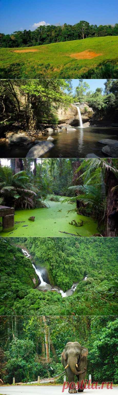 (+1) - Национальный парк Кхауяй! | УДИВИТЕЛЬНОЕ