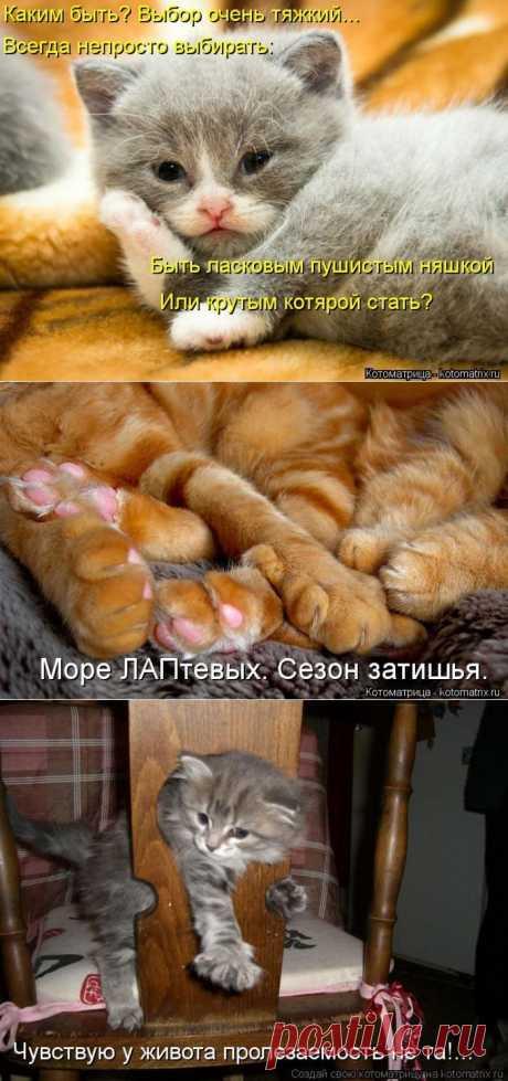 Весёлая котоматрица)).
