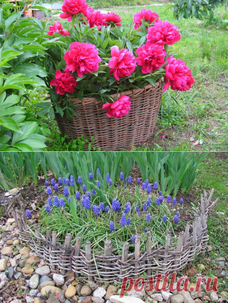 Flower bed at the dacha by the hands for the beginning photos