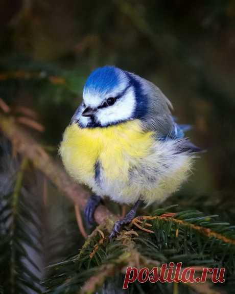 Птицы а-ля Angry Birds от Осси Сааринен (Ossi Saarinen)