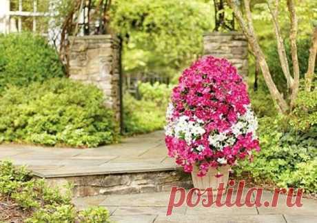 цветы | Записи в рубрике цветы | Дневник Ирини_Спиридопулу