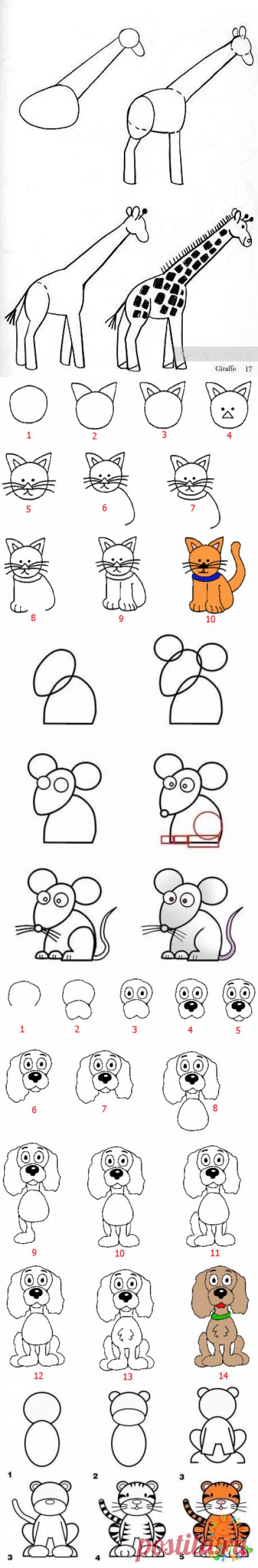 Учимся рисовать животных. 12 простых схем — Я happy МАМА