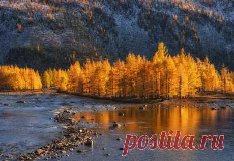 Река с золотым отливом где-то в Восточных Саянах (Республика Бурятия), на границе с Монголией. Автор фото – Андрей Грачев: nat-geo.ru/photo/user/17584/
