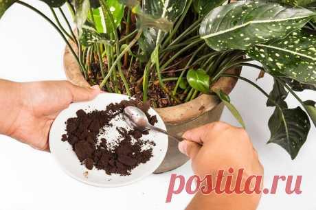Бурное цветение и пышная листва обеспечены, если полить растения этой простой подкормкой | Азбука огородника | Яндекс Дзен