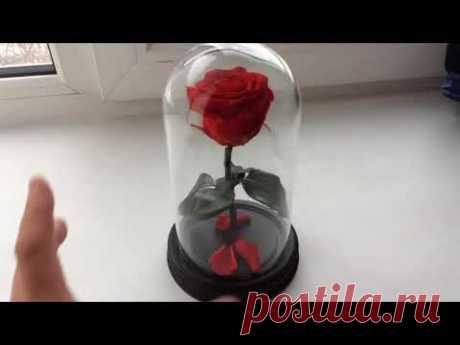 Роза в колбе. В чем секрет долговечной розы?!