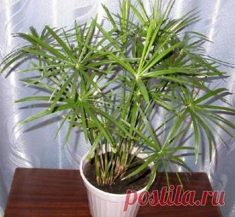 Полезны ли комнатные растения