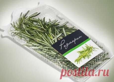 Как вырастить розмарин из магазинной веточки | Зеленные и пряные (Огород.ru)