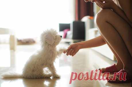 Почему стоит завести домашнего любимца   Делимся советами