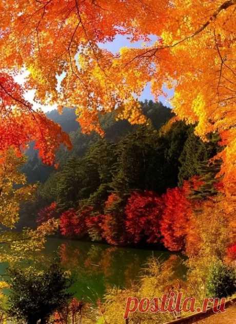 Чем дальше жизнь ..., тем хочется жить чище, Честнее...., как-то правильнее жить... И чаще думать о Вселенском смысле - Любовь в своём сознании растить...  Показать полностью...