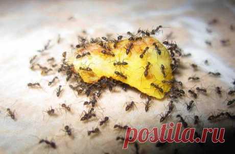 Как избавиться от муравьев на участке навсегда! — Полезные советы