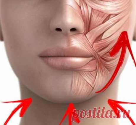 Упражнение «Точеный подбородок»: подтягиваем щеки и улучшаем овал лица Это очень важное упражнение поддерживает мышцы подбородка. Восстанавливаясь, мышцы подтягивают обвислые щеки и улучшают овал лица...
