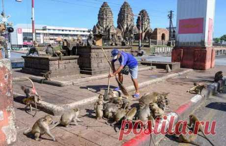 Агрессивные макаки терроризируют жителей тайского города . Тут забавно !!!