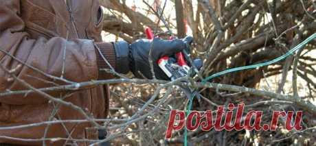 Обрезка деревьев: как правильно обрезать плодовые и фруктовые деревья осенью, схемы, фото и видео для начинающих | Полезный портал про сад-огород | Яндекс Дзен