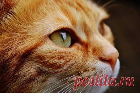 Умеют ли кошки общаться   Журнал Популярная Механика