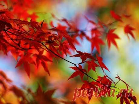 Прохожий — «Осенние листья» на Яндекс.Фотках