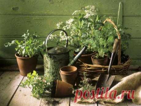 Целительная сила приправ на вашей кухне - Блог Марина на 24open.ru