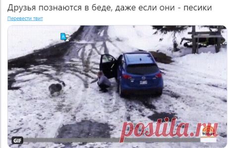 "Лента.ру on Twitter: ""Друзья познаются в беде, даже если они — песики https://t.co/HT9MGnN7Tu"" / Twitter"