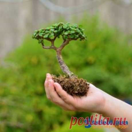 10 საუკეთესო ნატურალური სასუქი ოთახის მცენარეებისთვის » Statiebi.Com - საინტერესო სტატიები