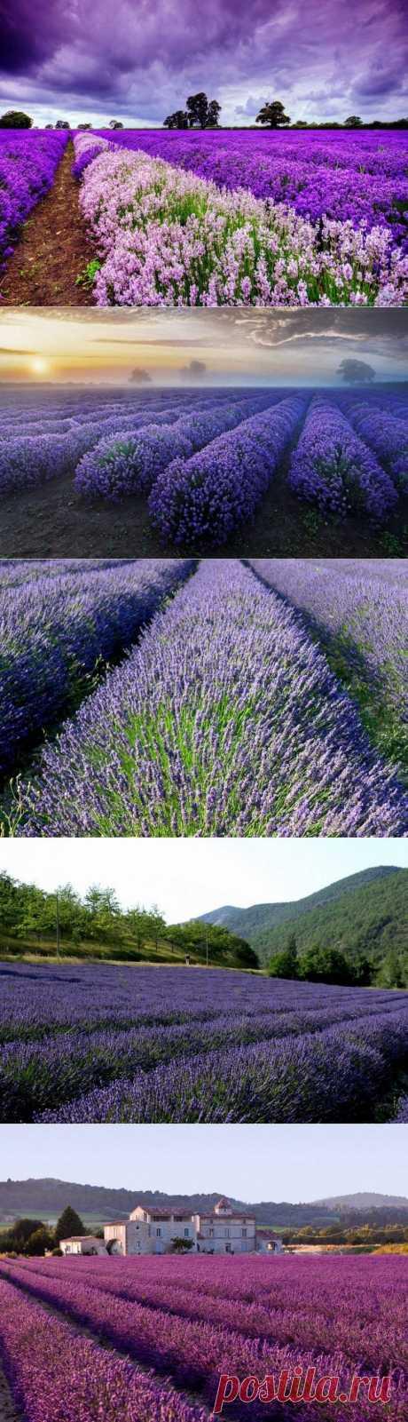 Прованские травы / Туристический спутник