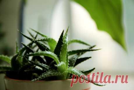 Ці рослини – кисневі бомби! 6 рослин, які корисно мати у власному домі – COMA