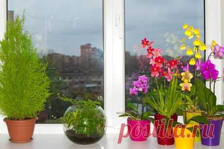 Почему не стоит держать орхидеи дома, совет цветоводов о котором вы не знали