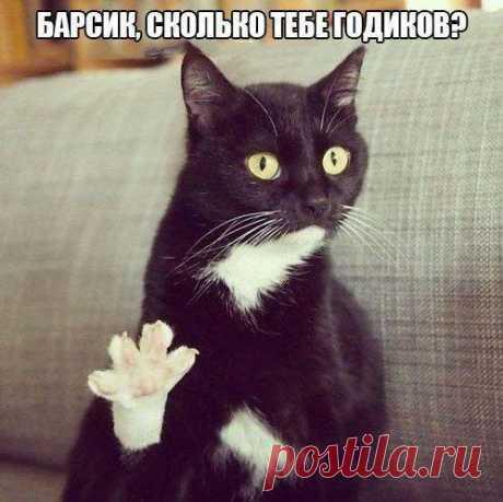 Emotional cats