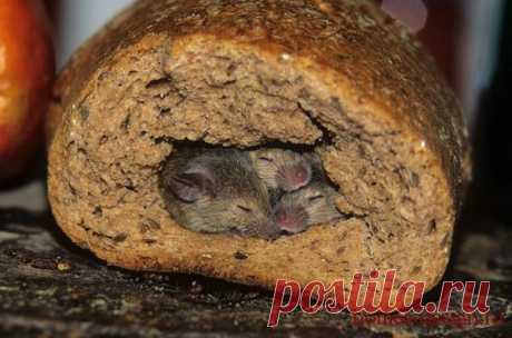 Ультразвуковые отпугиватели от мышей и крыс