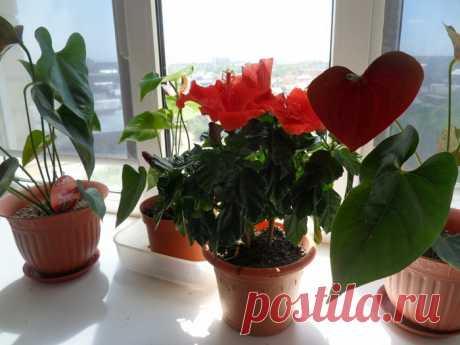 Классный рецепт цветочной подкормки
