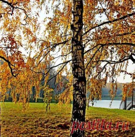 122 карточки в коллекции «осень в берёзовом лесу» пользователя Александр С. в Яндекс.Коллекциях