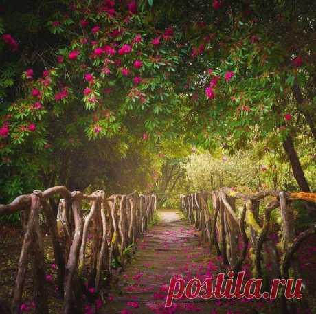 Мадейра – автономный округ Португалии, который расположен на одноименном архипелаге у северо-западного побережья Африки, состоящем из четырех вулканических островов