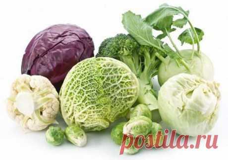 Разновидность капусты или кулинарная ценность забытых овощей У каждой капусты свой особенный аромат, текстура и вкусовая палитра. Она сочетается практически со всеми продуктами и соусами, раскрывает свои вкусы при любой кулинарной обработке. Однако некоторые сорта теряют свой изумительный вид и вкус, если нарушить технологию приготовления. Специфический аромат овоща не всегда облагораживает блюдо… Белокочанная капуста – королева блюд Держать капустные поля когда-то считалось …