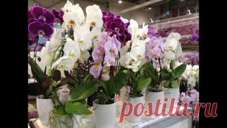 Орхидее не нужен прозрачный горшок - объясню почему | Vusadebke.com | Яндекс Дзен