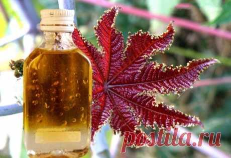 Касторовое масло на все случаи жизни